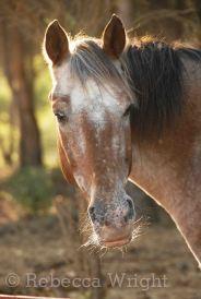 HorseFrance2010_8672copyright