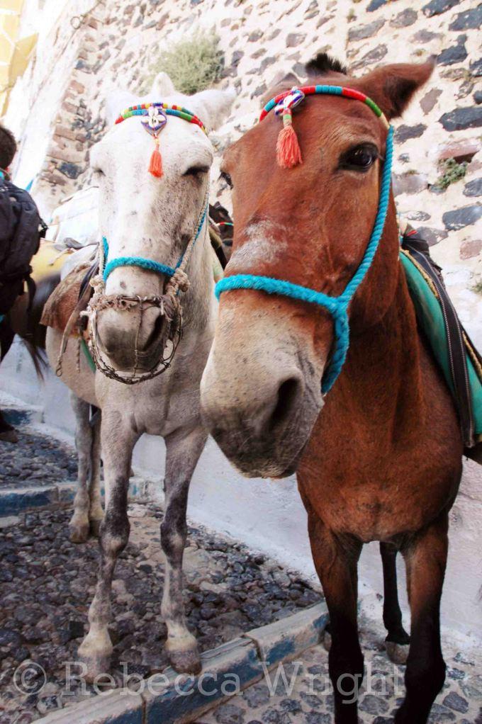 Santorini (9)copyright